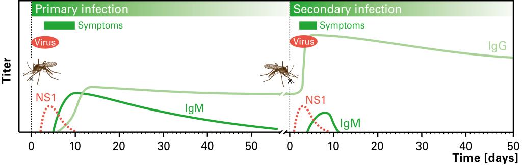 Dengue Ak Grafik UK