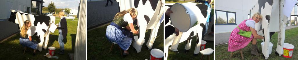 """Eine Oktoberfestattraktion: Kühe-Wettmelken - Wer bekommt die meiste """"Milch"""" aus den Zitzen?"""