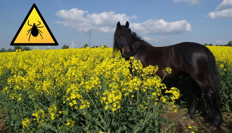 Zecken sind ein gesundheitliches Risiko – auch für Pferde