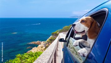 TravelingDog_Leishmania