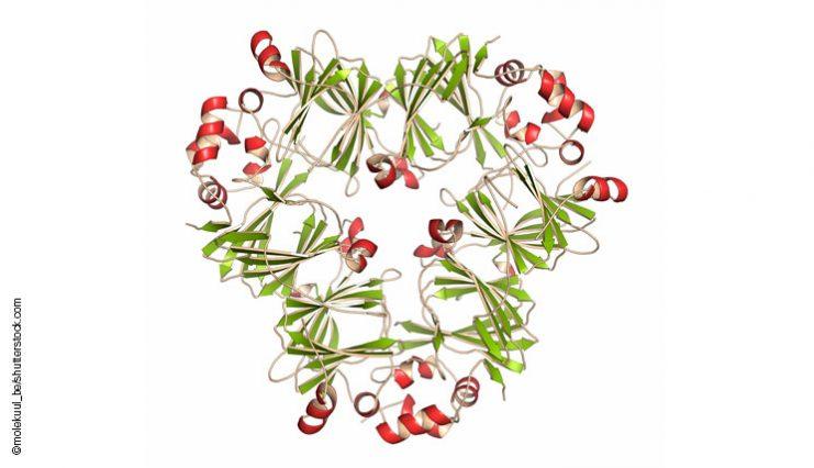 peanut-allergen-arah1-molecule